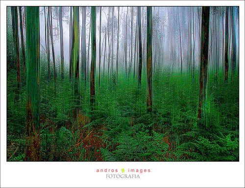 MAR DE ARBOLES, el bosque misterioso // SEA OF TREES, the mysterious forest