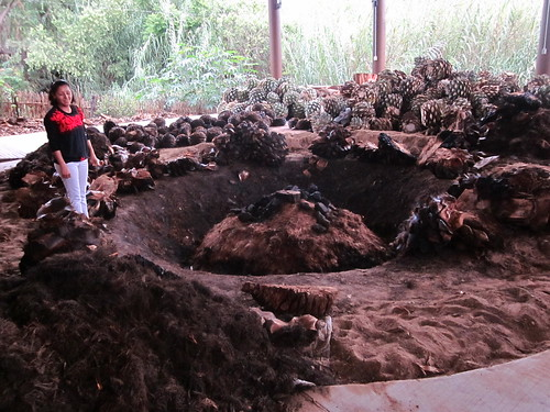 maguey roasting pit