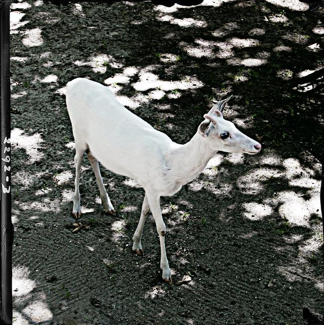 Zoo0712 014