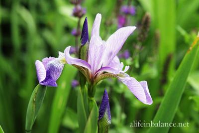 flowers-garden-spring-6