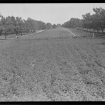 Victory Garden, Franklin Park, looking toward entrance arch