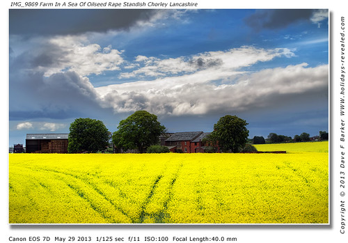IMG_9869 Farm In A Sea Of Oilseed Rape Flowers Standish Chorley Lancashire by Just Daves Photos