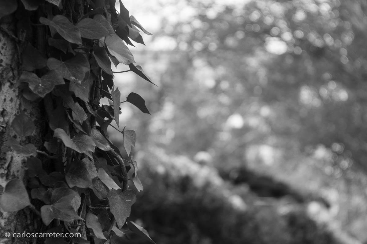 Sobre vegetación