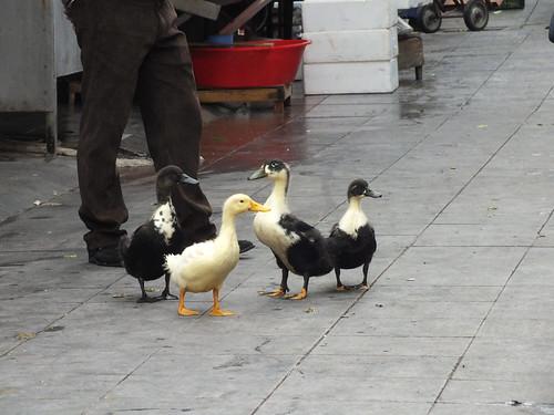 Háp-háp-háp, jönnek a kacsák!