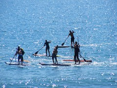 surface water sports, surfing--equipment and supplies, sports, sea, surfing, ocean, wind wave, wave, water sport, stand up paddle surfing, paddle,
