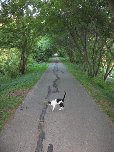 Cat'sMeowRide