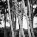 Marsh Trees