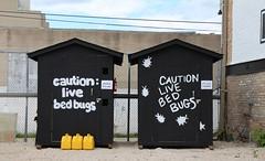 Bedbugs !