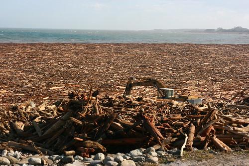 莫拉克颱風的瞬間強降雨,對台灣的原始林造成毀滅性的影響(圖片攝影:徐嘉君)
