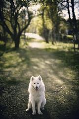 Jax in the Woods