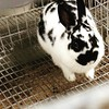 #brazoriacountyfair #cute #bunny