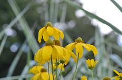 Web among yellow flowers