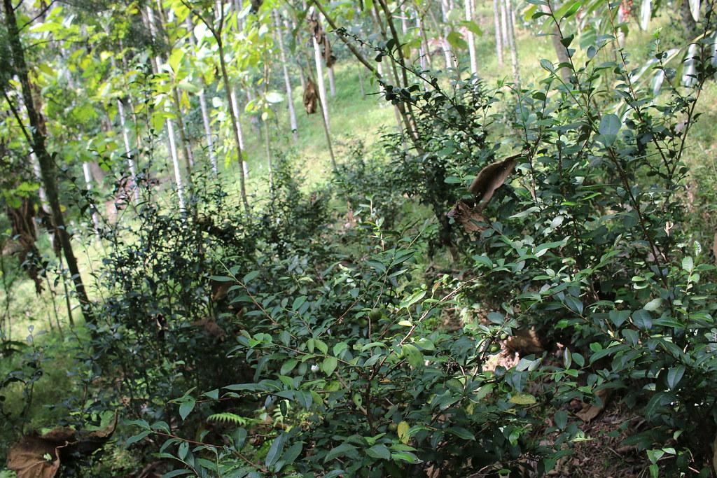 公館大象自然生活農場 (19)