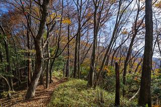 笹の樹林帯・・・右奥に大岳山の山頂が見える