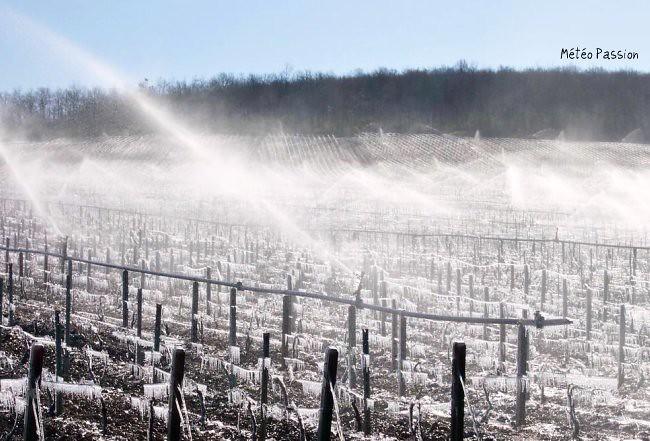 aspersion d'eau contre les gelées printanières dans le vignoble de Chablis météopassion