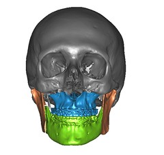 nose, head, mouth, illustration, jaw, bone, skull,