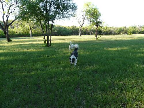 dogs texas april 2012