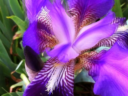 shade of purple