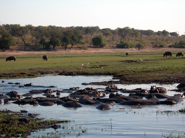From the boat, Chobe National Park