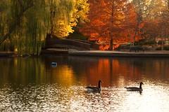 Loose Park Pond, Kansas City