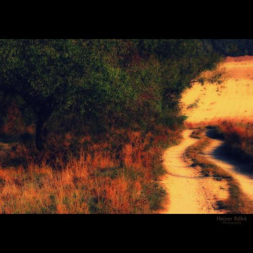 hungary természet fa táj tájkép út ősz canonsx10 mygearandme ringexcellence