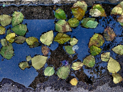 folhas água eu reflexo