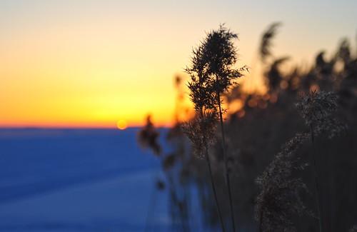 winter pori