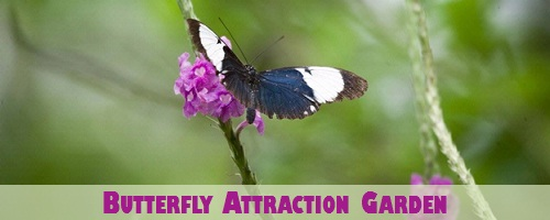 Jamaica Butterfly Attraction Garden