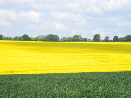 broad yellow swathe