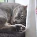 Sleepy Nims by cox-on-the-box - we have rain!