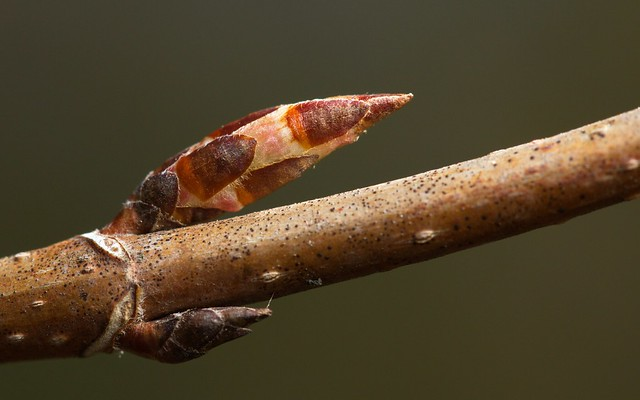 Scales and claw (f1-20120424-0153)