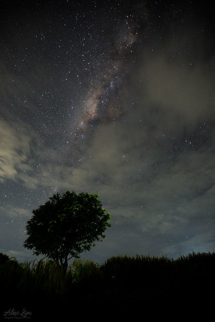 Milky over the tree