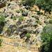 Kardamaina | 15. House of goats