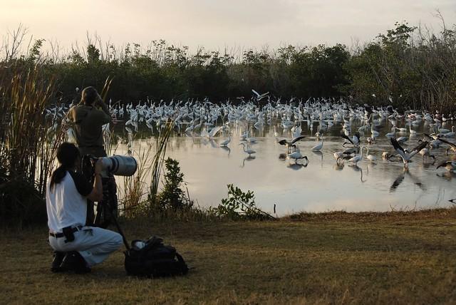 Birding- Mrazek Pond, NPSPhoto,