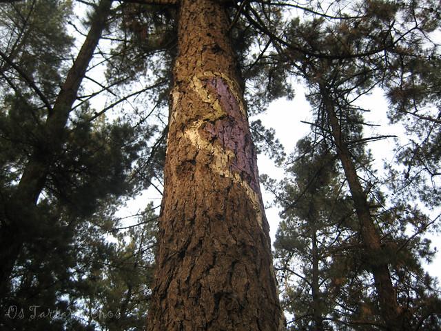 árbore por L