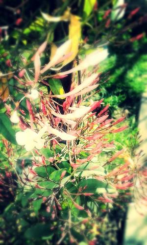 Autor: florangenelo