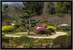 Toowoomba Japanese Gardens-016=