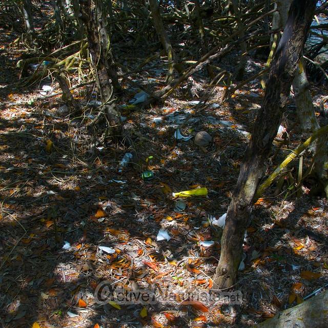 trash 0000 Key Biscayne, Miami, Florida, USA