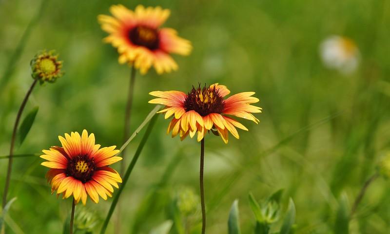 Summer Wild Flowers ~ Sony A580