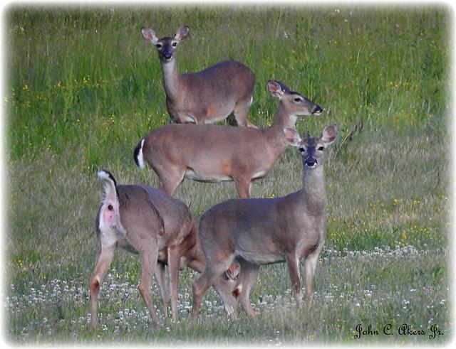 Local Deer-