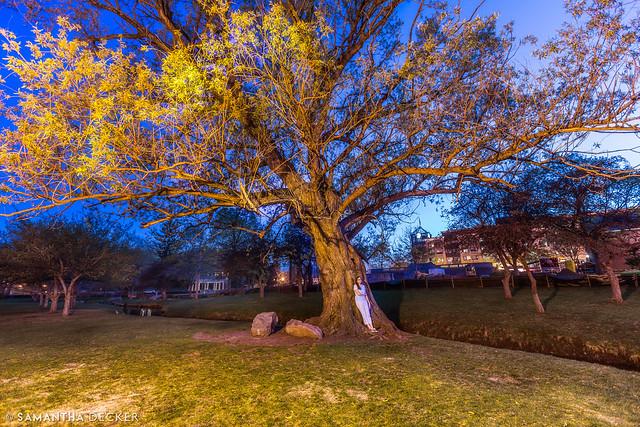 Self Portrait:  Tree at Night