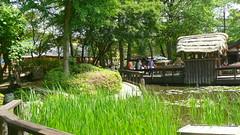 Wetland Area by Restaurants