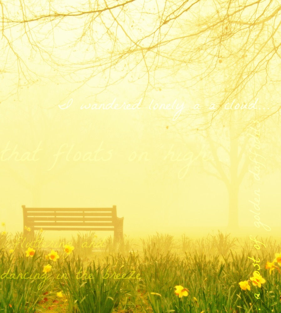 Daffs and bench with text