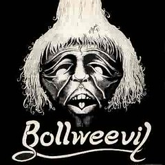 bollweevil