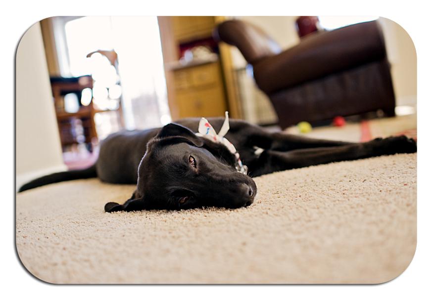 Zoe pup 2