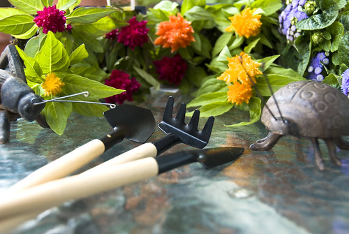 Close-up of plants and gardening tools.