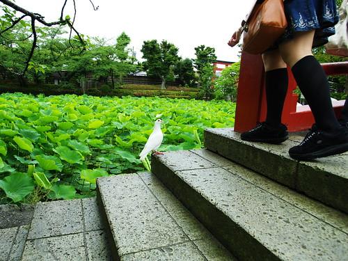 鶴岡八幡宮 #1