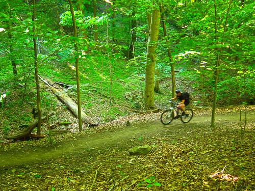 Patapsco Ridge Trail