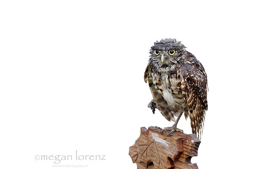Grumpy by Megan Lorenz