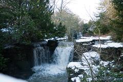 Winter 2013 (Jesmond Dene)  (6)